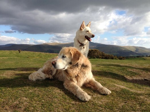 Dog Friendly Hotels Mid Wales