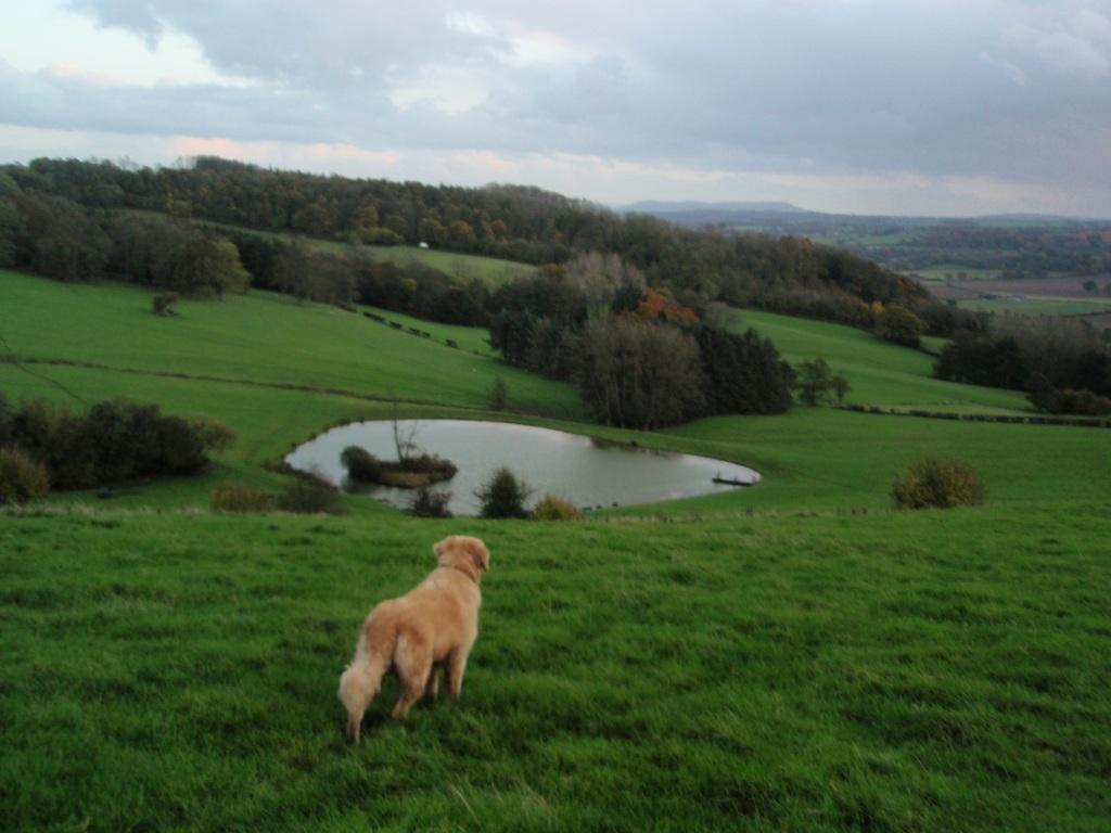 Arthur's Stone, Jack the dog surveys the valley, lake and dog walking fields