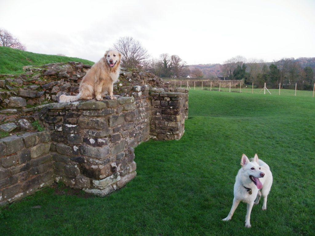 Caerleon Roman Fortress Amphitheatre Jack and Sheeba dogs walking