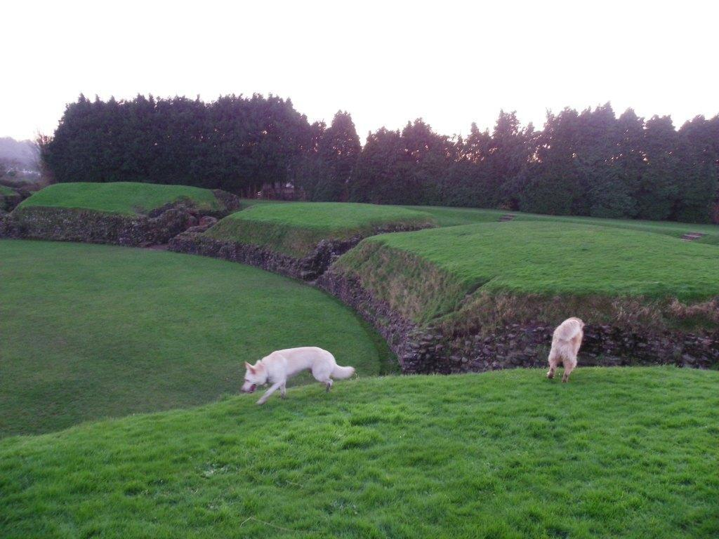 Caerleon Roman Fortress Amphitheatre Dog Walking