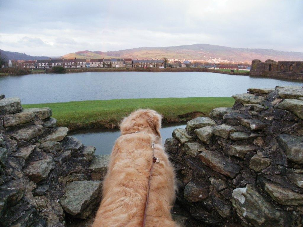 Caerphilly Castle Jack the dog on castle ramparts surveys the view over Caerphilly town