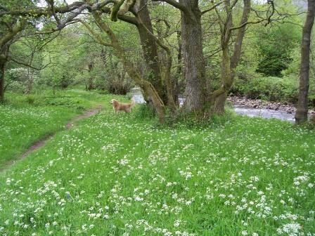 Dog walking in Wales - Craig y Nos Country Park Meadow