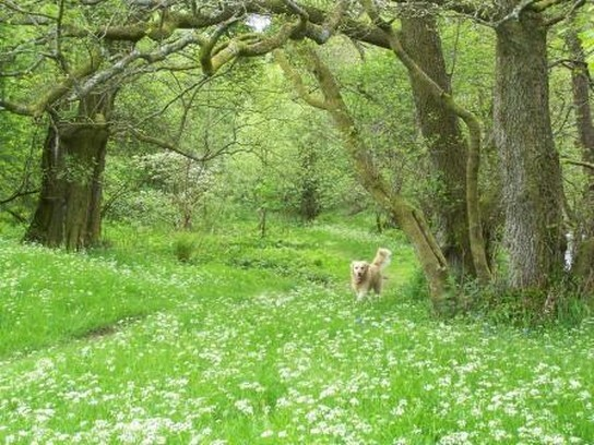 Dog Friendly B&B Brecon Wales Jack runs along path beside river Tawe in Craig y Nos Country Park