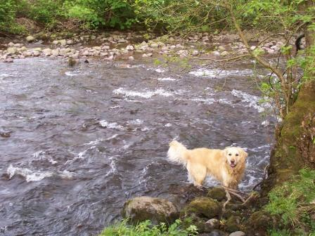 Dog walking in Swansea Valley, Wales - Craig y Nos Country Park River Tawe