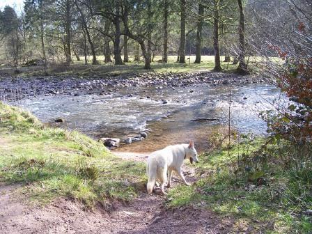 Dog Friendly accommodation Wales - Craig y Nos Country Park River Tawe