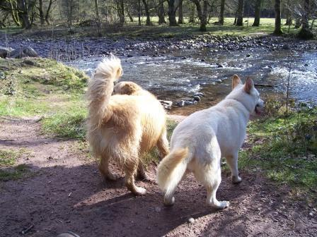 Dog Friendly Holiday Swansea Wales Craig y Nos Country Park River Tawe