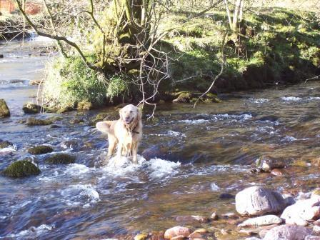 Dog Friendly hotels Wales - Craig y Nos Country ParkJack in River Tawe
