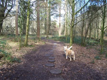 Dog Friendly hotels Wales - Craig y Nos Country Park dogs on Woodland paths
