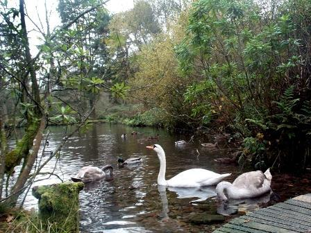 Dog Friendly hotels Wales - Craig y Nos Country Park Swan Lake