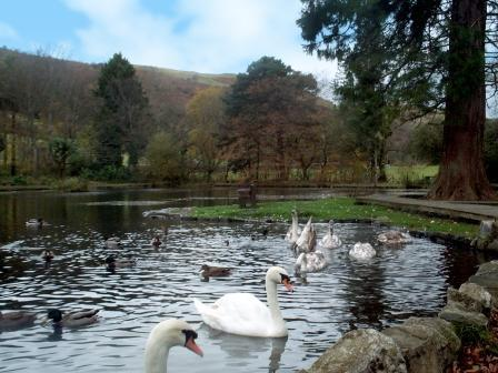 Dog Friendly hotels Wales - Craig y Nos Country Park Boating Lake Swans and Ducks
