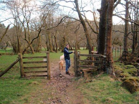 Dog Friendly hotels Wales - Craig y Nos Country Park Woodland