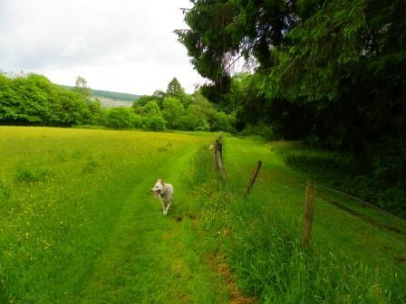 Dog walking in Swansea Valley, Wales - Craig y Nos Country Park Meadow