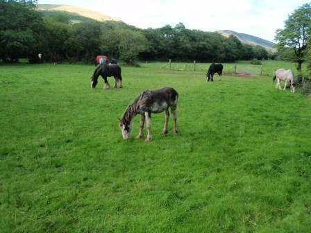 Dog Friendly hotels Wales - Craig y Nos Country Park horse fields