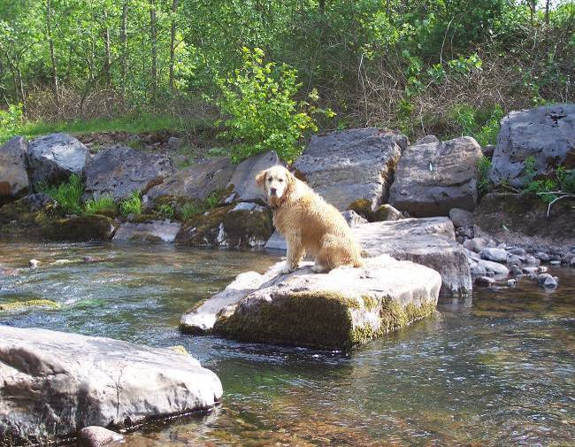 Dog walking in Swansea Valley, Wales - Craig y Nos Country Park River Tawe stones crossing