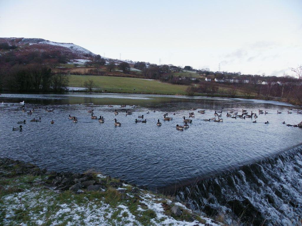 Dare Valley Country Park in Winter, duck covered lake and water rushing down the weir