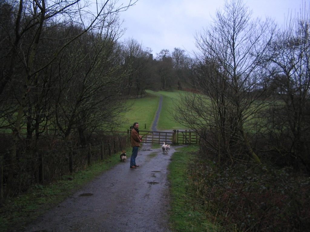 Dinefwr Park dog walking along dog friendly path to old castle ruin