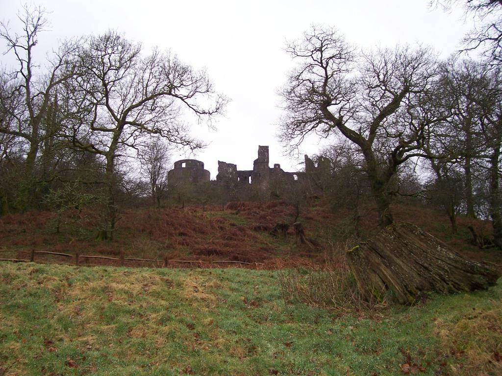 Dinefwr Park dog friendly woodland walking path to castle ruin on hill