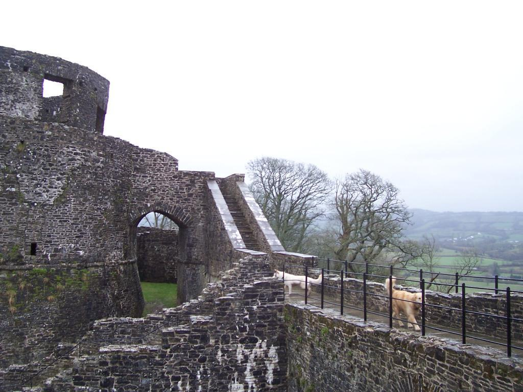 Dinefwr Castle Tower and dogs walking on ramparts