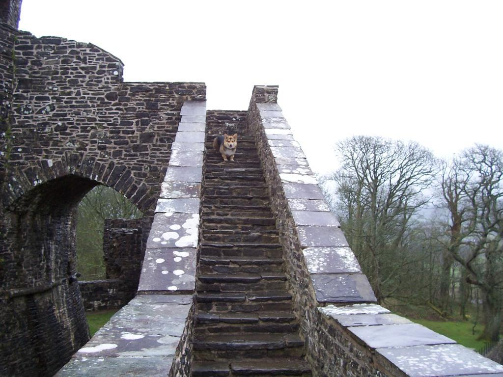 Dinefwr Castle corgi dog on steps
