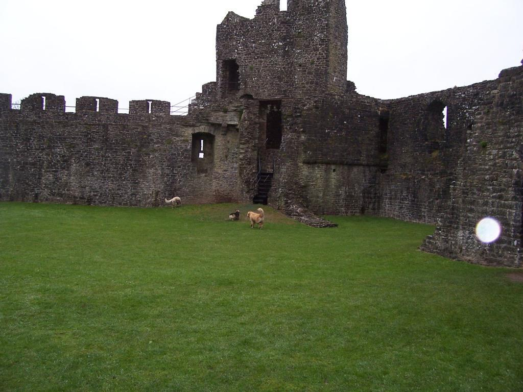 Dinefwr Castle grassy courtyard with dogs running free