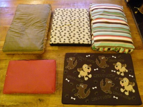 Dog Beds for Dogs in our Patti Bar