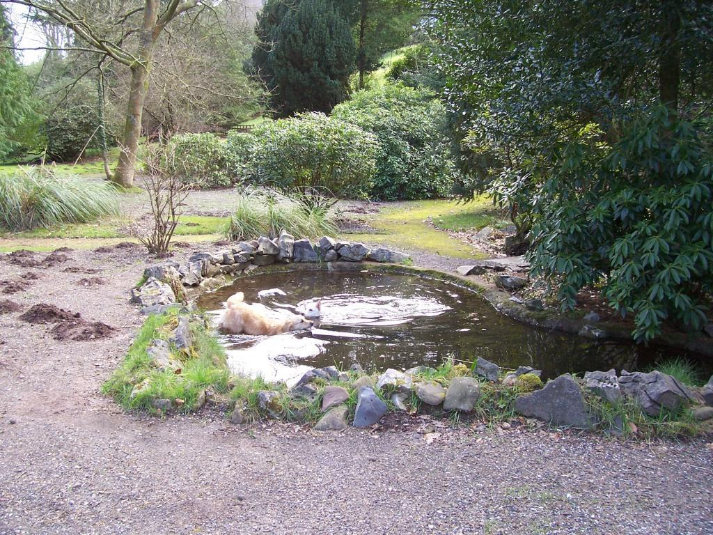 Dog Friendly Bed and Breakfast Hotel Craig y Nos Castle's dog swimming pool in lower gardens