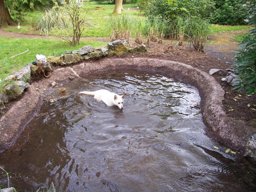 Dog Friendly Bed and Breakfast Craig y Nos Castle Hotel dog swimming pool
