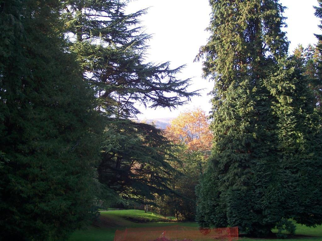 Tall trees in Dog Friendly Hotel in Brecon Craig y Nos Castle Lower Garden