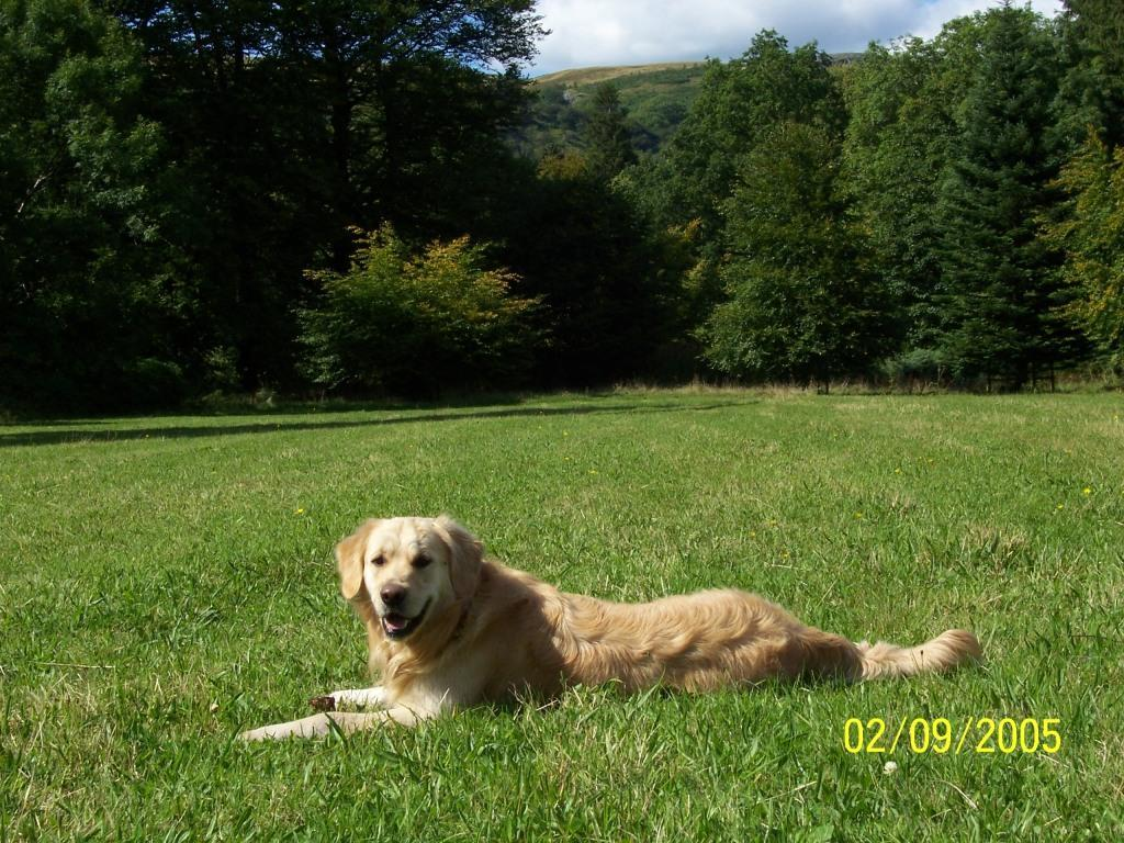 Dog Friendly Hotel in Brecon Craig y Nos Castle Jack the dog lies down in sun in Lower Garden