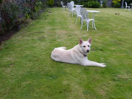 dog friendly hotel wales craig y nos theatre garden 02 dog