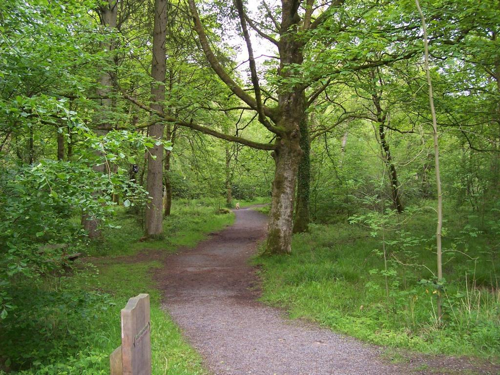 Dog Friendly Holidays Brecon Wales Craig y Nos Country Park woodland paths