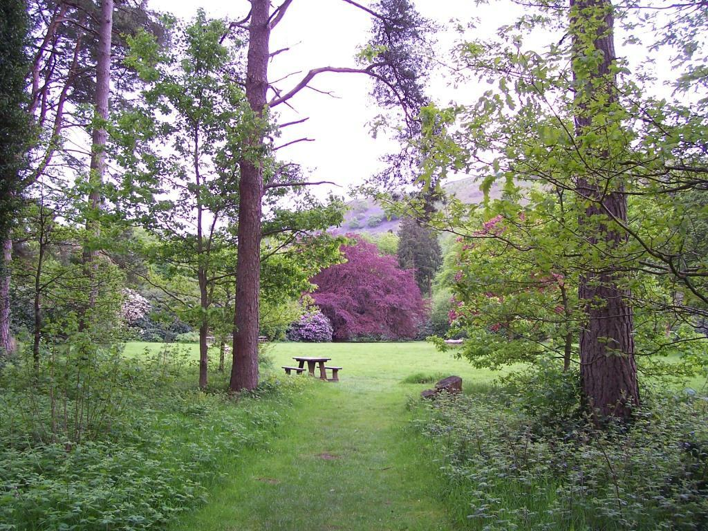 Dog Friendly Holidays Brecon Wales Craig y Nos Country Park path through trees to picnic meadow