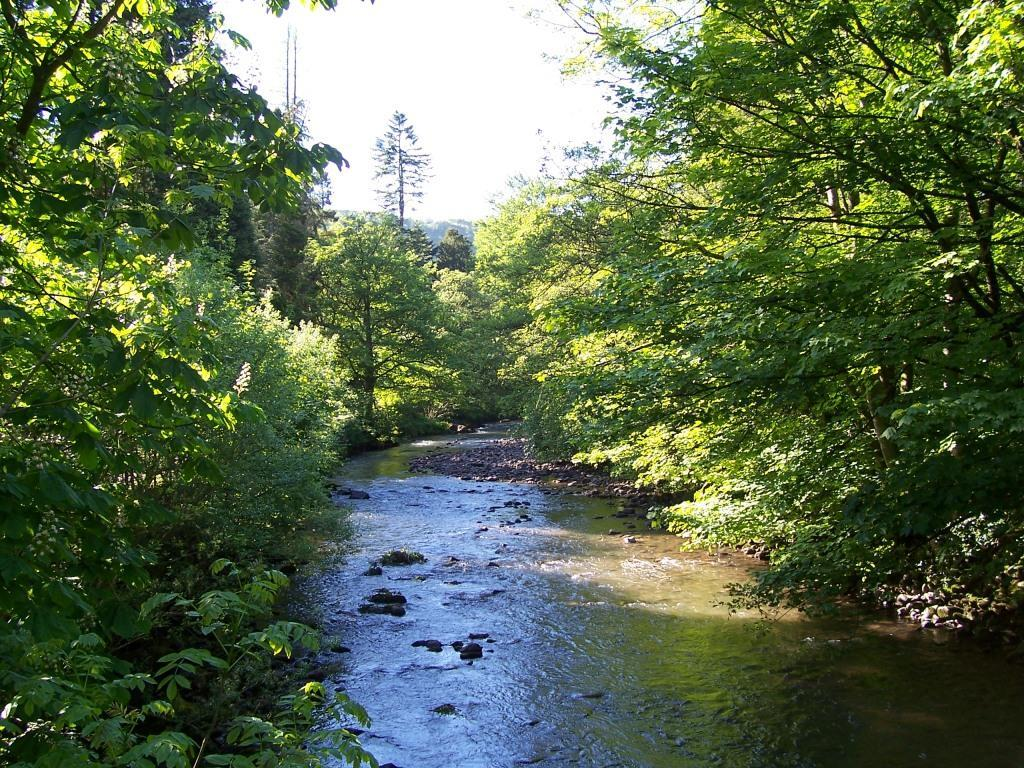 Dog Friendly Holidays Brecon Wales Craig y Nos Country Park River Tawe