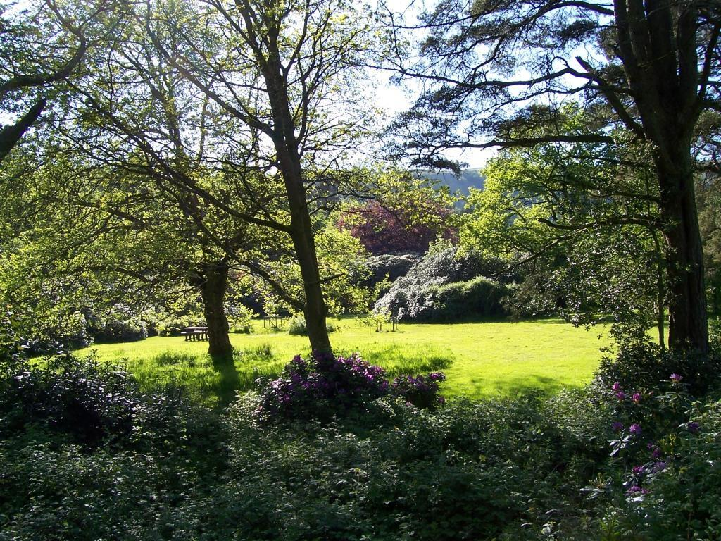 Dog Friendly Holidays Brecon Wales Craig y Nos Country Park trees and bushes