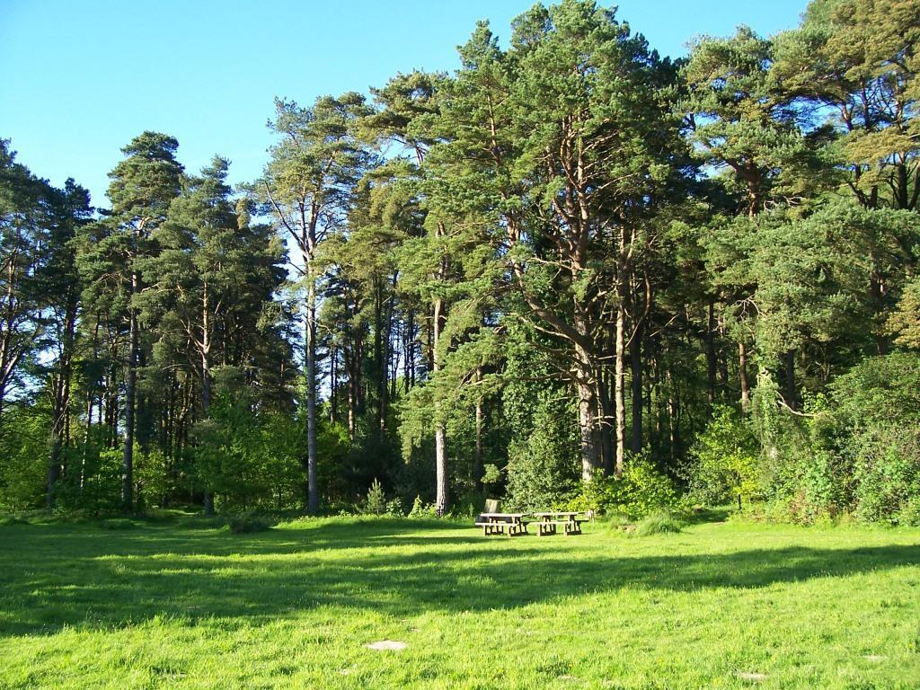 Dog Friendly Holidays Brecon Wales Craig y Nos Country Park picnic meadow with tall trees