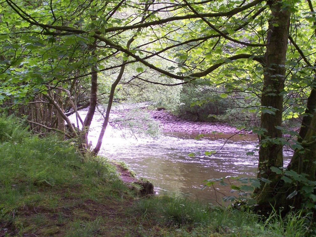 Dog Friendly Holidays Brecon Wales River Tawe in Craig y Nos Country Park