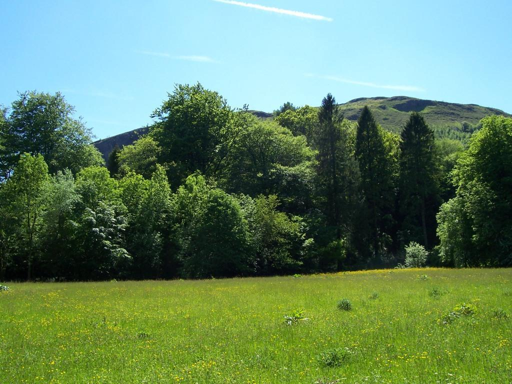 Dog Friendly Holidays Brecon Wales Craig y Nos Country Park hay meadow in summer