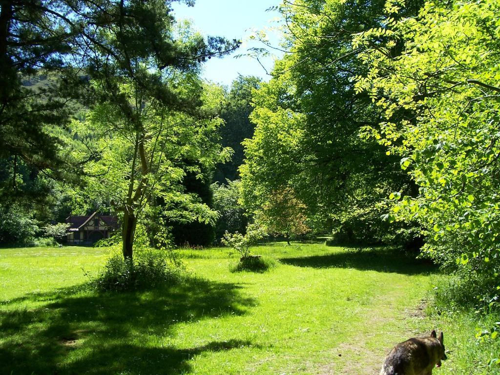 Dog Friendly Holidays Brecon Wales Craig y Nos Country Park