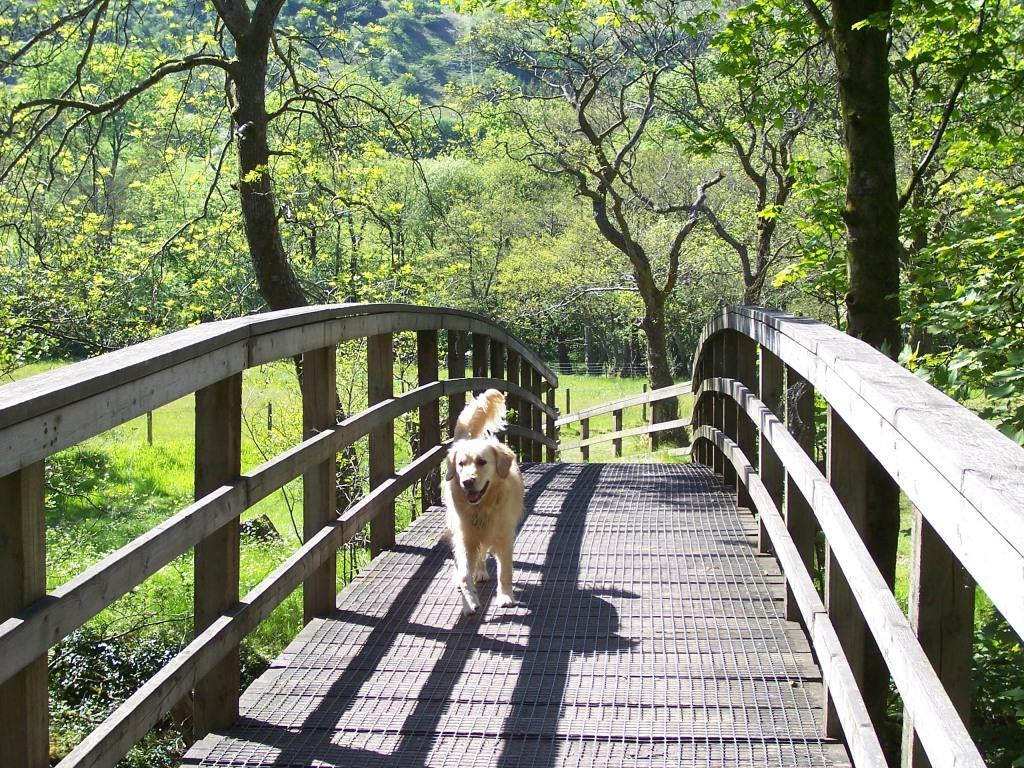 Dog Friendly Holidays Brecon Wales Craig y Nos Country Park Jack crossing bridge