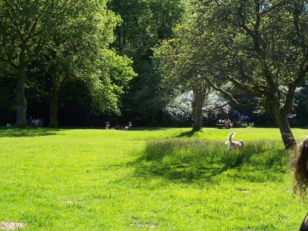 Dog Friendly Holidays near Brecon Wales Craig y Nos Country Park picnic meadow