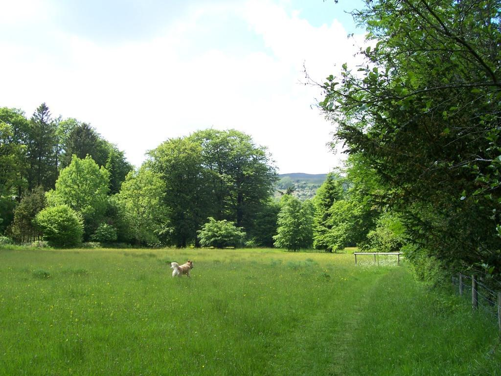 Dog Friendly Holidays in Brecon Beacons Wales Craig y Nos Country Park dog walking in meadow