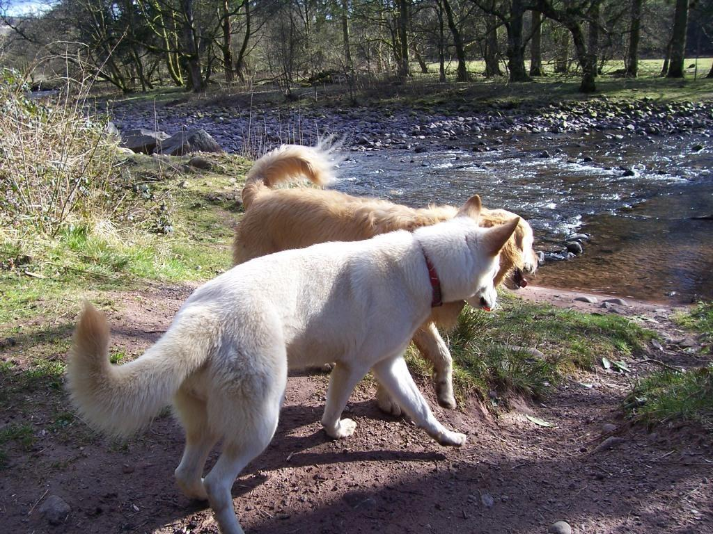 Dog Friendly Accommodation Brecon Wales Craig y Nos Country Park Jack and Sheeba on banks of river Tawe