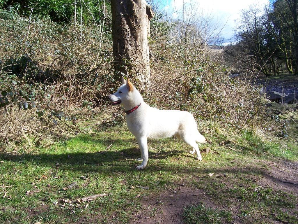 Dog Friendly Holidays Brecon Wales Sheeba the dog by River Tawe Craig y Nos Country Park