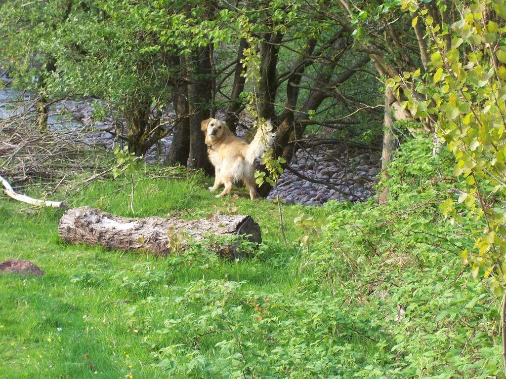 Dog Friendly Holidays Brecon Wales Jack the dog on riverbank in Craig y Nos Country Park