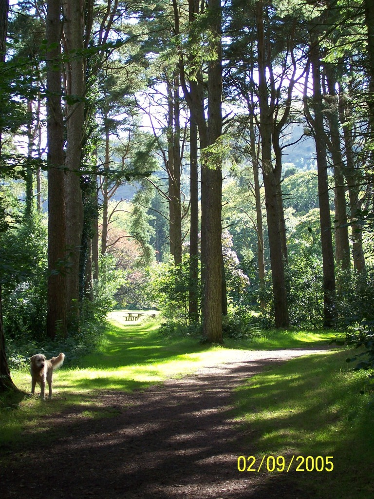 Dog Friendly Holidays Brecon Wales dog on tall trees path at Craig y Nos Country Park