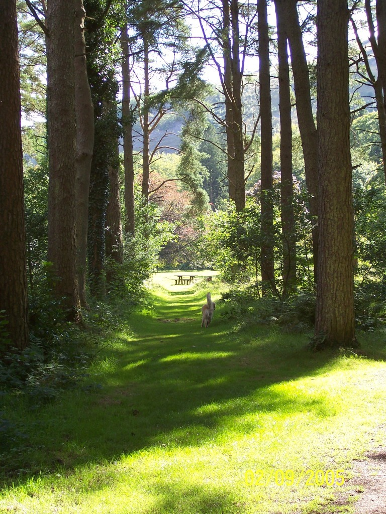 Dog Friendly Holidays Brecon Wales Craig y Nos tall trees path in Country Park