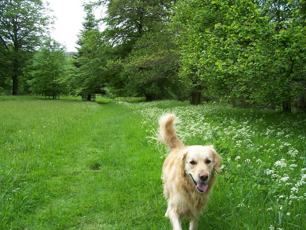 Dog Friendly Holidays dog walking Wales Craig y Nos Country Park