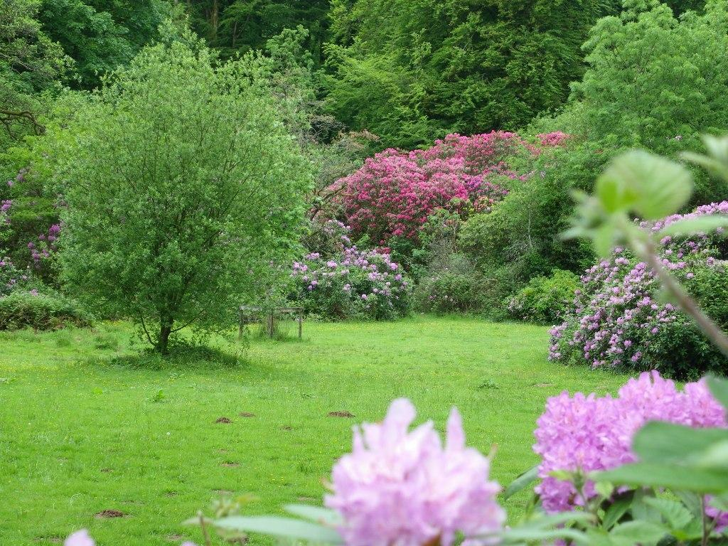 Dog Friendly Holidays Brecon Wales Craig y Nos Country Park Rhododendrons