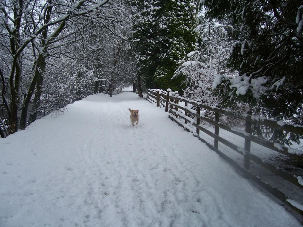 Dog Friendly Hotel Swansea Wales Craig y Nos Country Park Jack the dog running in Winter Snow