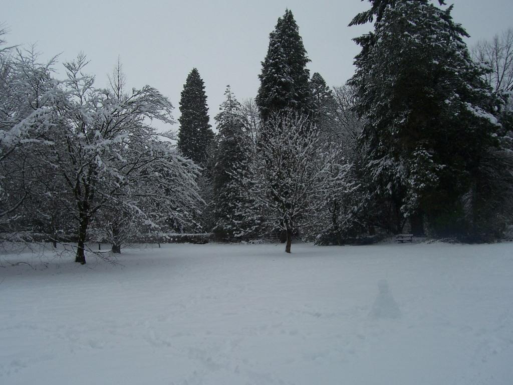 Dog Friendly Hotel Swansea Wales Craig y Nos Country Park trees in Winter Snow